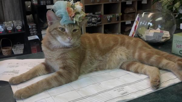 Baker the cat wears a floral headpiece